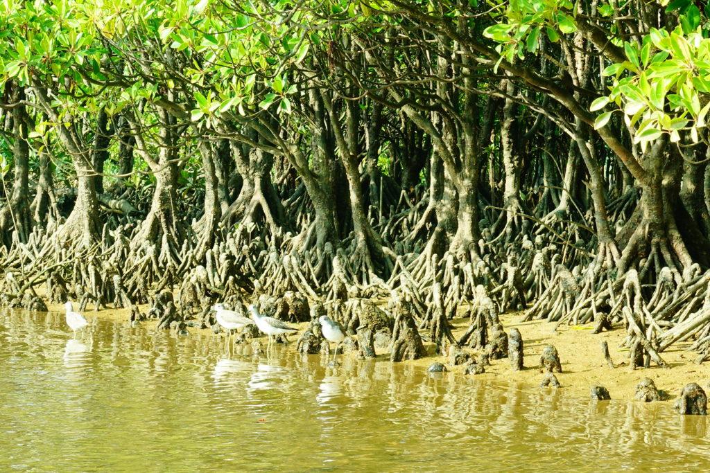 干潟の野鳥たち