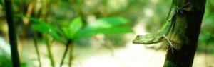 キノボリトカゲの画像