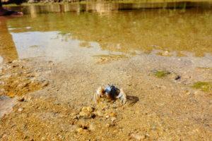 干潟の生き物
